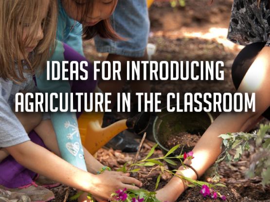 Ideas for introducing agriculture in the classroom